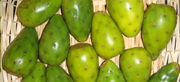 how to eat green cactus fruit
